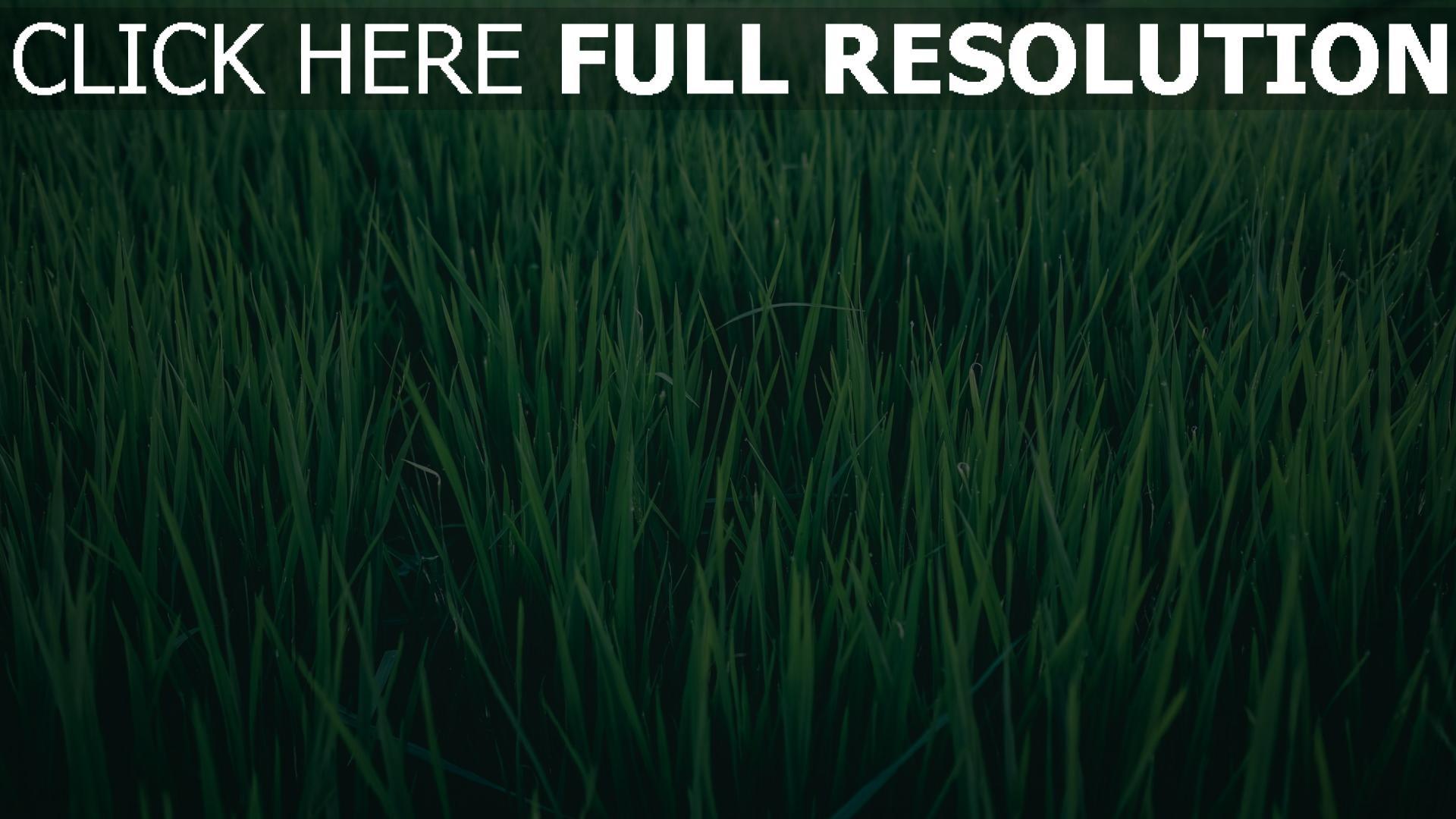hd hintergrundbilder grün gras feld 1920x1080