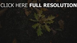 gras herbst laub eiche