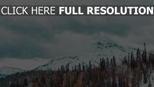 schneebedeckt bäume berge
