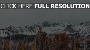 gipfel bäume schneebedeckt berge