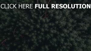 blätter pflanze zweige