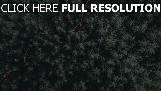 hd hintergrundbilder blätter pflanze zweige