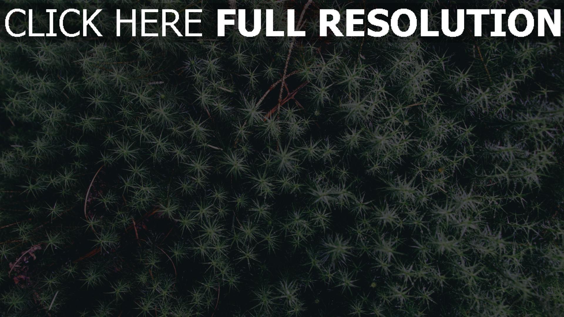 hd hintergrundbilder blätter pflanze zweige 1920x1080