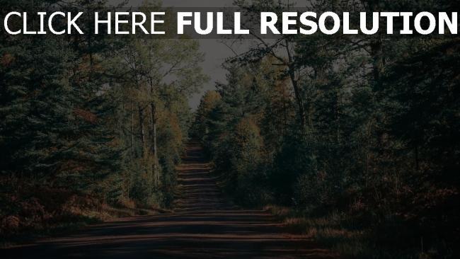 hd hintergrundbilder schatten bäume weg