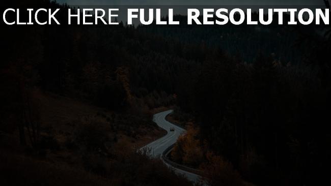 hd hintergrundbilder wald straße bewegung bäume