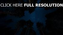 bäume sterne sternenhimmel nacht