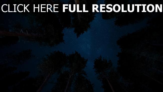 hd hintergrundbilder bäume sterne sternenhimmel nacht