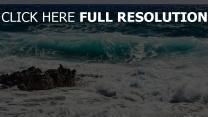 surf schaum strand meer