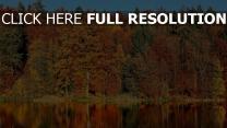 fluss reflexion bäume herbst