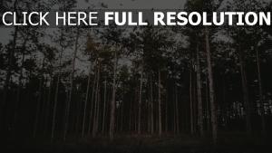 wald bäume gras abend