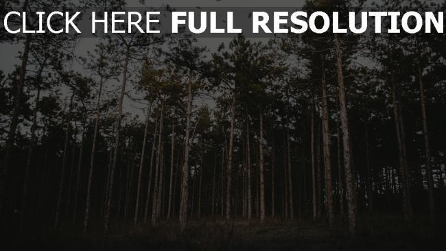 hd hintergrundbilder wald bäume gras abend