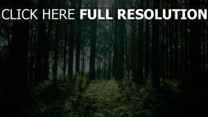 bäume licht wald