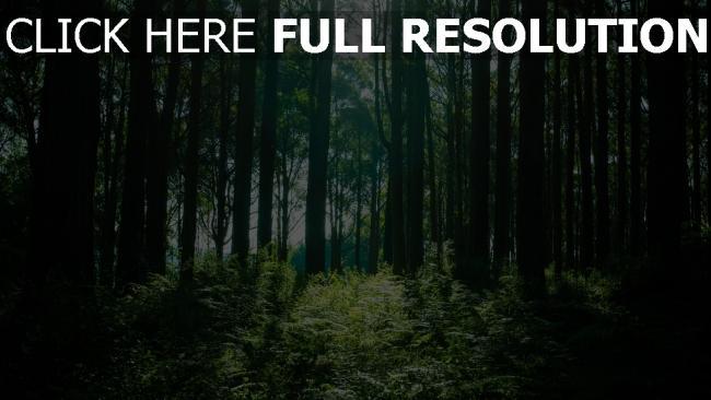 hd hintergrundbilder bäume licht wald