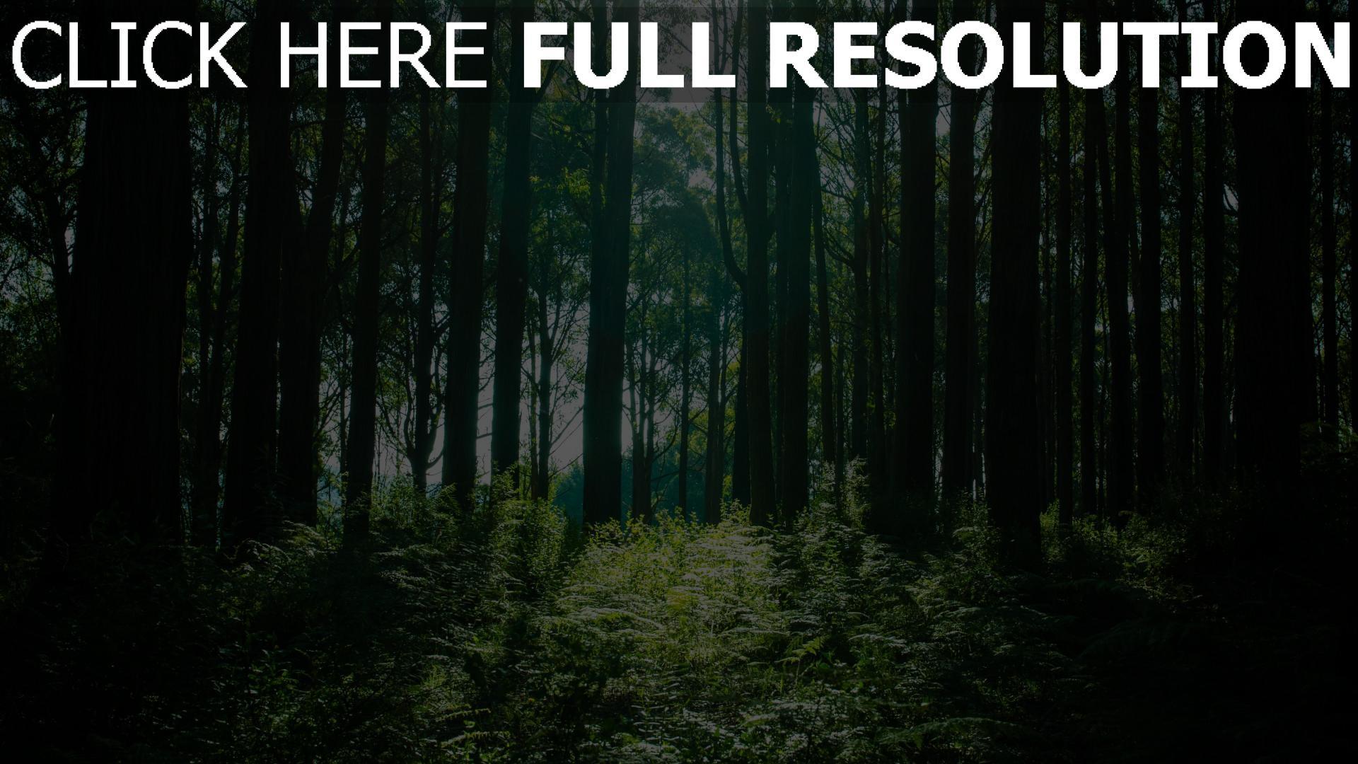 hd hintergrundbilder bäume licht wald 1920x1080