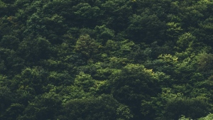 wald bäume ansicht von oben
