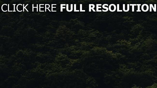hd hintergrundbilder wald bäume ansicht von oben