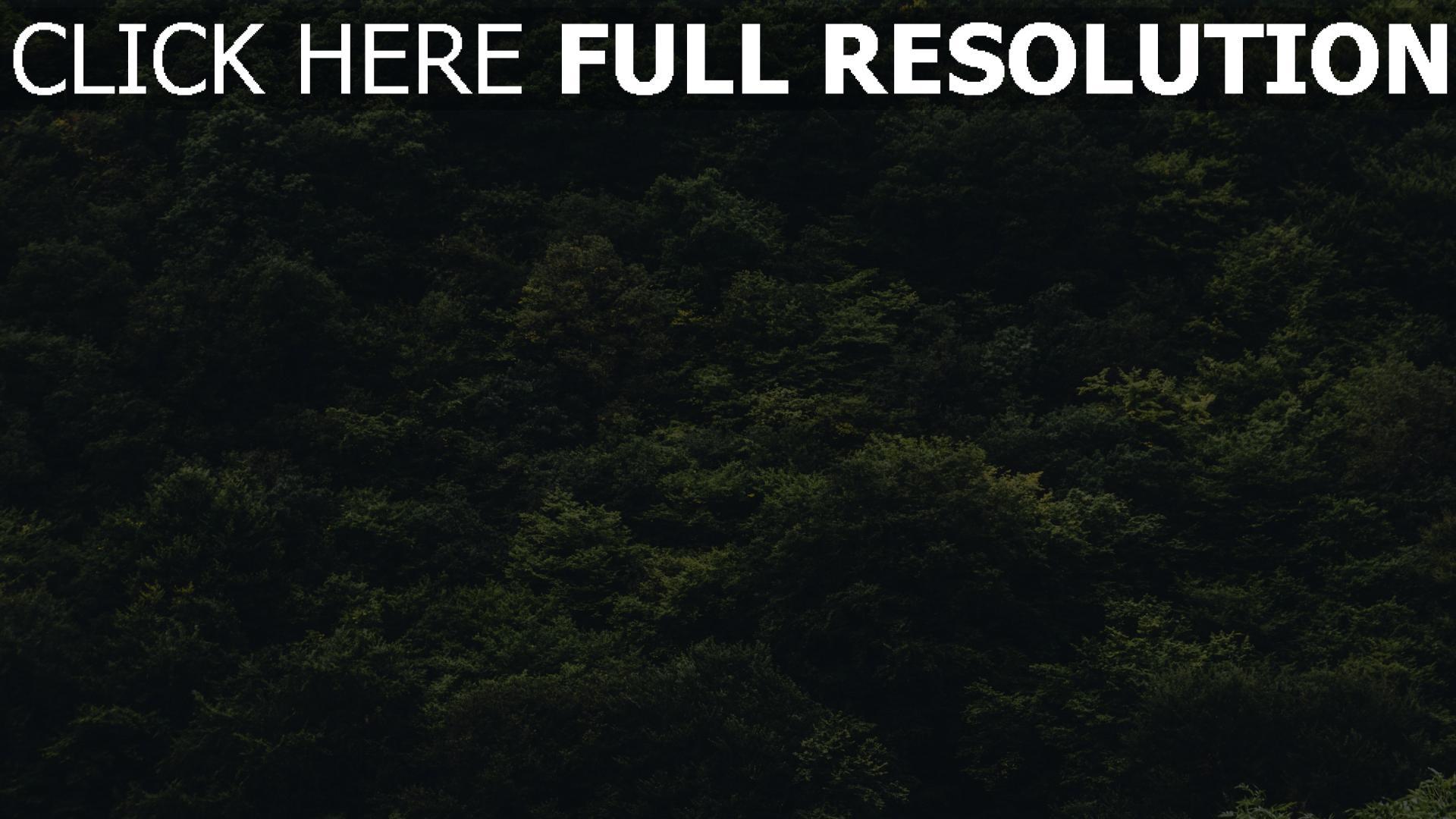 hd hintergrundbilder wald bäume ansicht von oben 1920x1080