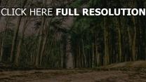 weg wald bäume