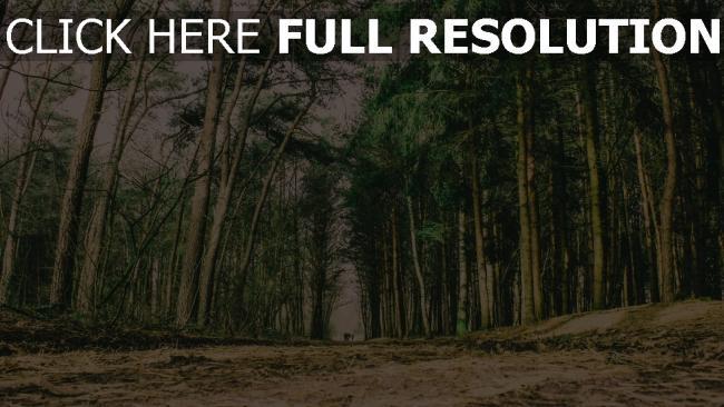 hd hintergrundbilder weg wald bäume