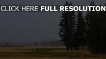 bäume wald gras