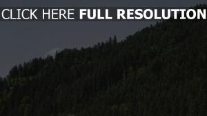 bäume grün hügel himmel
