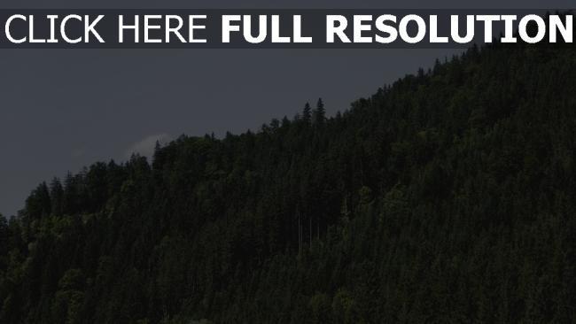 hd hintergrundbilder bäume grün hügel himmel