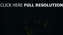 nacht sternenhimmel palme