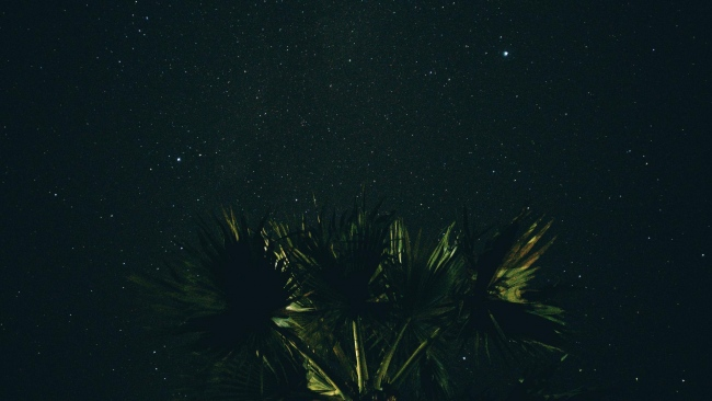hd hintergrundbilder nacht sternenhimmel palme