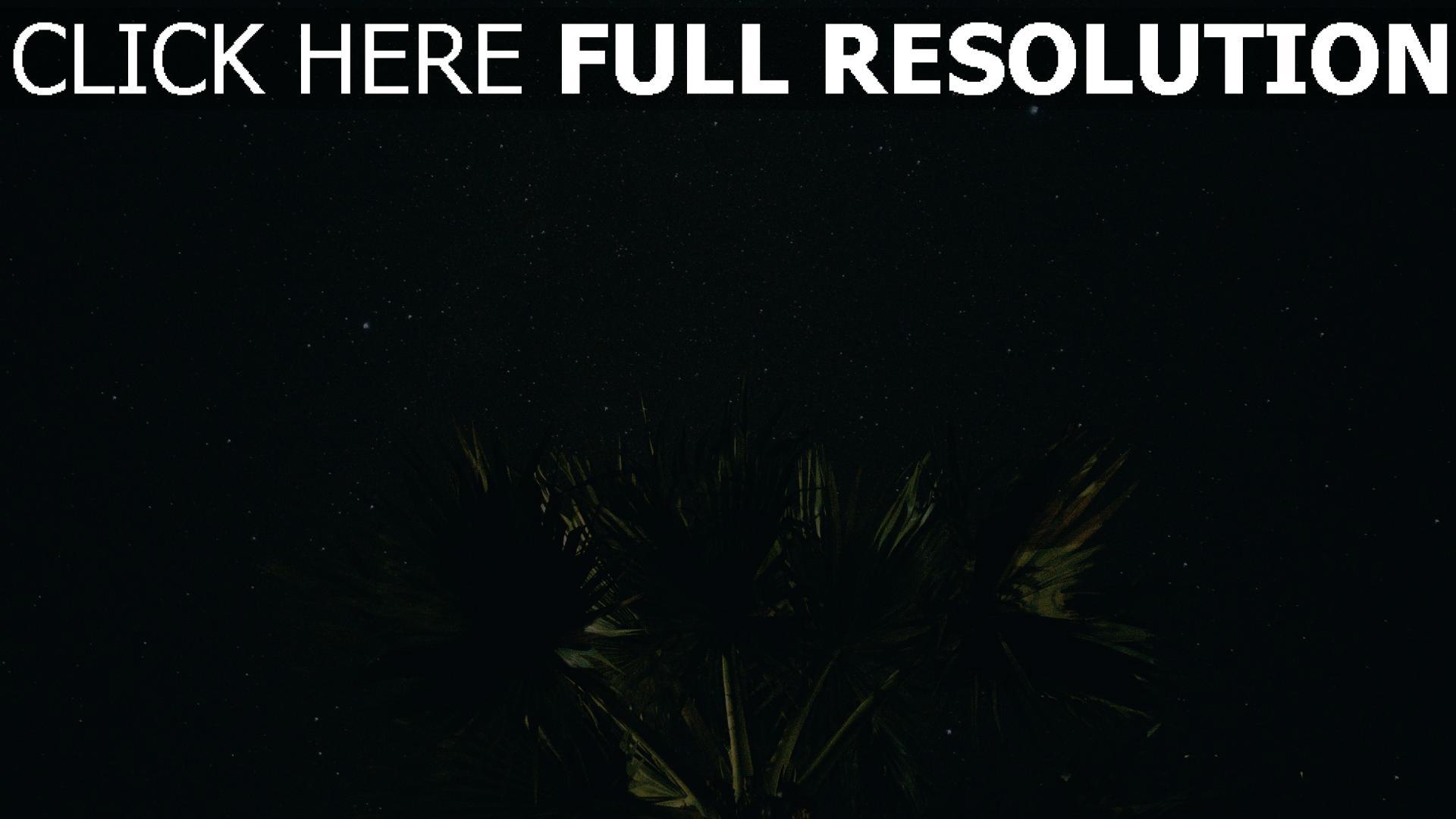 hd hintergrundbilder nacht sternenhimmel palme 1920x1080