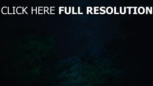 sternenhimmel sterne bäume nacht