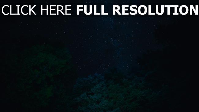 hd hintergrundbilder sternenhimmel sterne bäume nacht