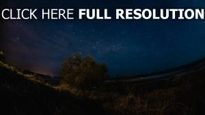 nacht baum sternenhimmel