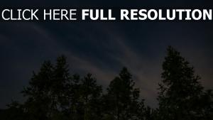 bäume sternenhimmel himmel