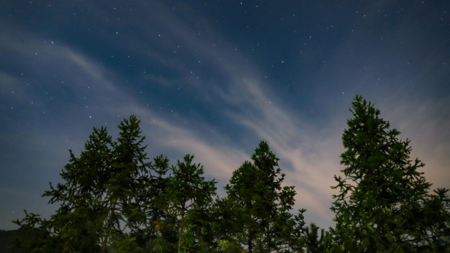hd hintergrundbilder bäume sternenhimmel himmel