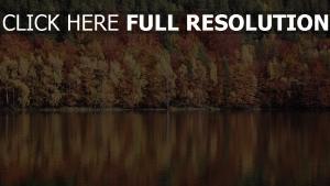 fluss reflexion bäume