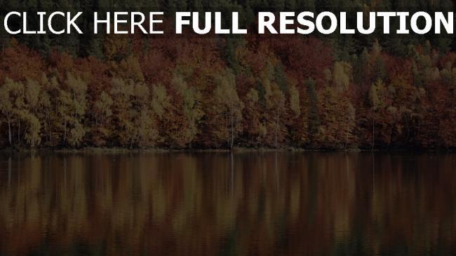 hd hintergrundbilder fluss reflexion bäume