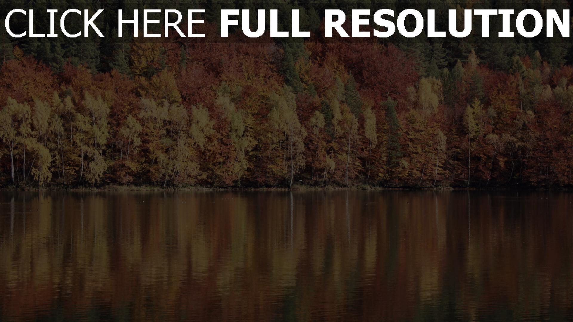 hd hintergrundbilder fluss reflexion bäume 1920x1080