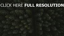 ansicht von oben straße bäume
