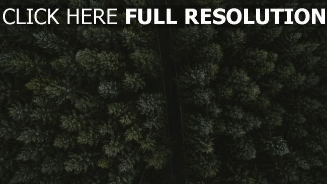hd hintergrundbilder ansicht von oben straße bäume
