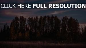 bäume gras sonnenuntergang himmel