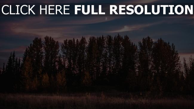 hd hintergrundbilder bäume gras sonnenuntergang himmel