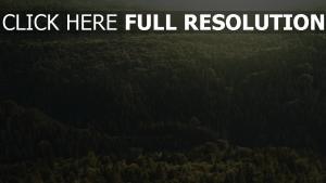 draufsicht licht bäume