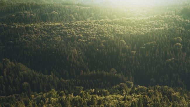 hd hintergrundbilder draufsicht licht bäume