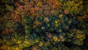 herbst bäume ansicht von oben