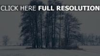 bäume schnee winter