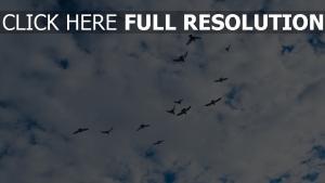 vögel himmel wolken