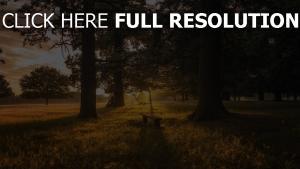 gras wald bank bäume dämmerung