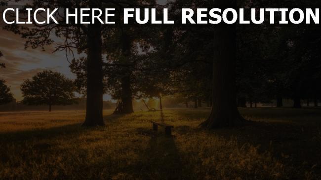 hd hintergrundbilder gras wald bank bäume dämmerung