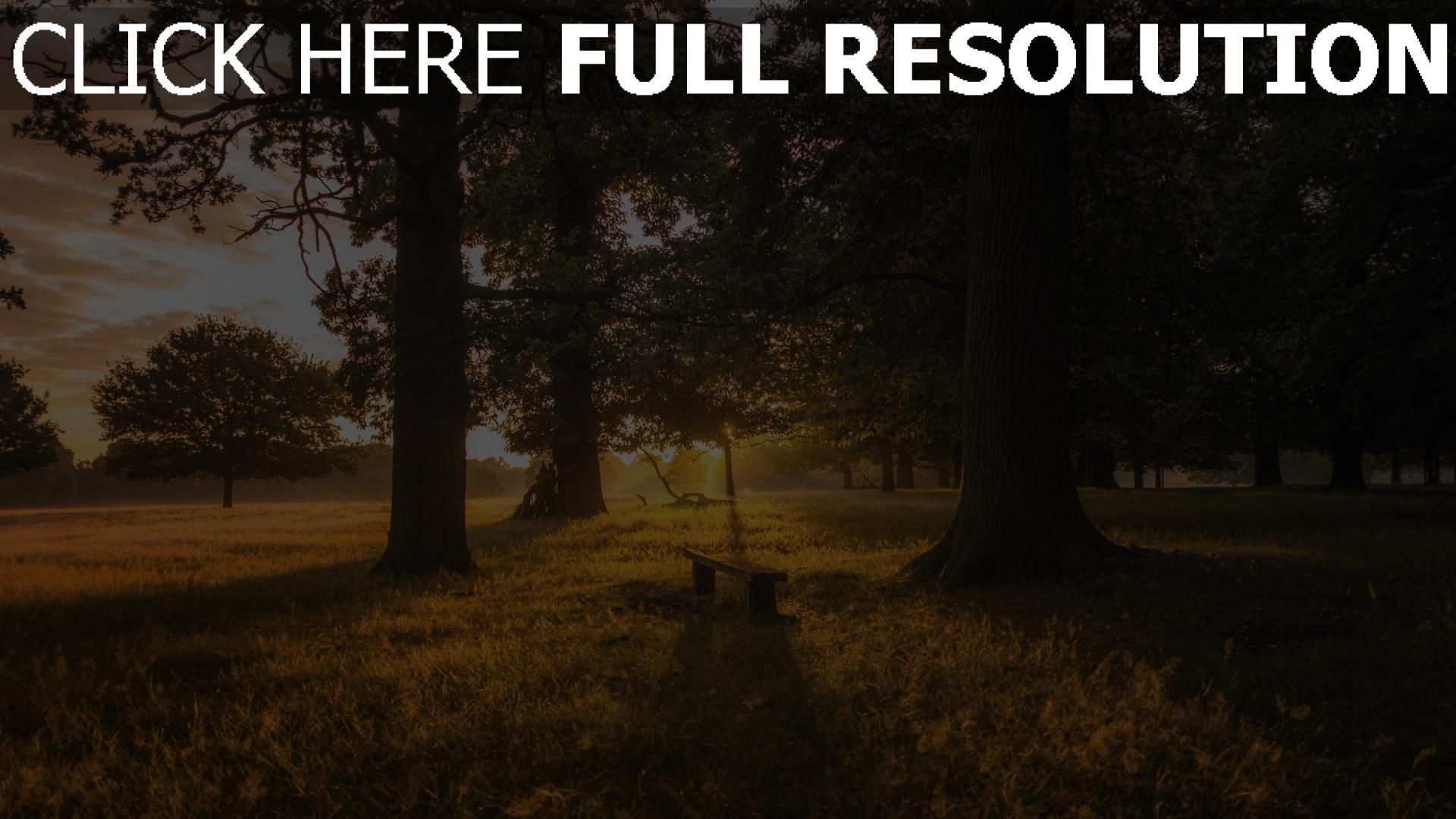 hd hintergrundbilder gras wald bank bäume dämmerung 1920x1080