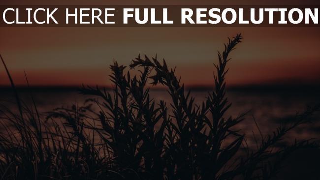 hd hintergrundbilder pflanze gras sonnenuntergang